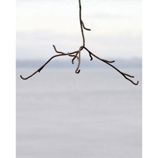 Twig Mobile Display, Hanging 11x17x9 inch. Pg.51 - On Sale 50 percent off original price 11.7