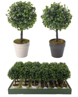 317002050 Boxus Pot Plant Assorted Color