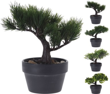 317002710 Bonsai Tree