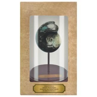 Fossil in cloche. Real fossils, glass, MDF. 16,4x16,4x25,0cm. oq/4,mc/4 Pg.105