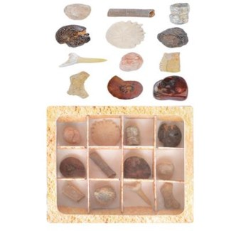 Fossils collection in giftbox. Real fossils. 11,4x12,8x3,5cm. oq/18,mc/36 Pg.105