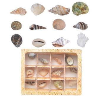 Shell collection in giftbox. Real shells. 11,4x12,8x3,5cm. oq/18,mc/72 Pg.105