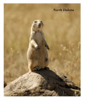 01 8x10 ND Prairie Dog