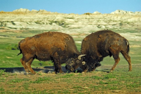 09 3x5 SD Buffalo