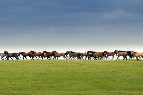 04 3x5 SD Wild Horse