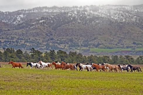 01 3x5 SD Wild Horse