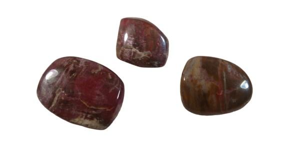 Petrified Wood Pebbles 12 DP