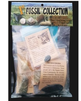 1st Fossil Collection