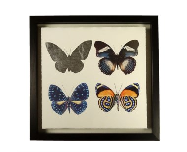 Butterflies - A