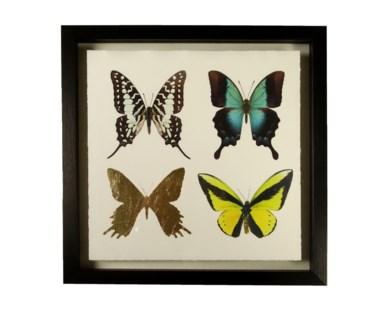 Butterflies - B