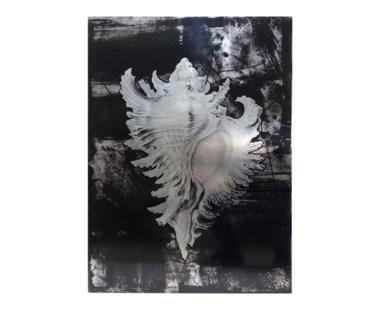 Haeckel Shell - A