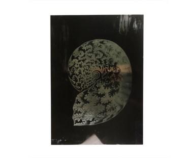 Haeckel Shell - B