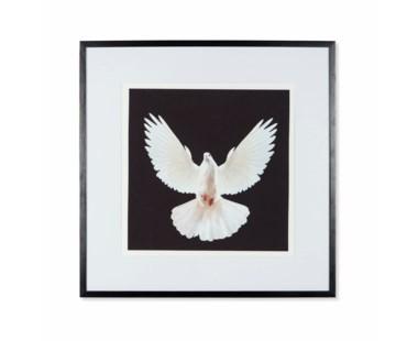 Dove - A