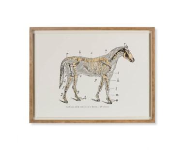 Gold Skeleton - Horse