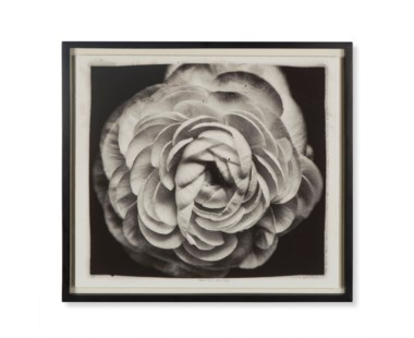 Andre Eichman - Black & White Flower