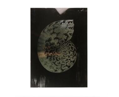 Haeckel Shell