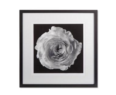 Black Blossom - A