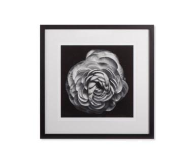 Black Blossom - B