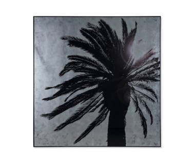 Silver Leaf Palm Tree - B