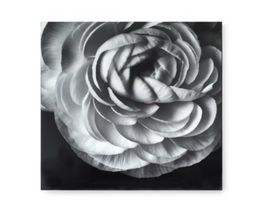 Black & White Flower - Acrylic Dry Mount / E