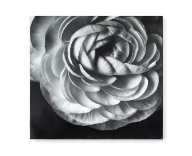 Black & White Flower - Acrylic Dry Mount / E