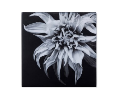 Black & White Flower - Acrylic Dry Mount / F