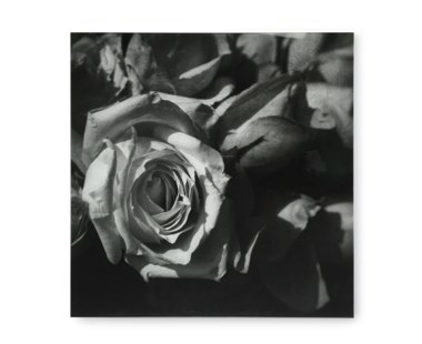 Black & White Flower - Acrylic Dry Mount / G