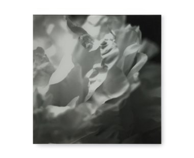 Black & White Flower - Acrylic Dry Mount / H