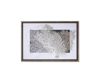 White & Grey Coral
