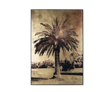 Gold Leaf Palm Tree