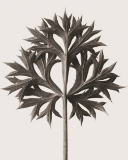 Sea Holly Metal Sign