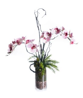 White and Pink Orchid Arrangement