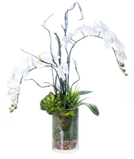White Orchid and Succulent in Moss