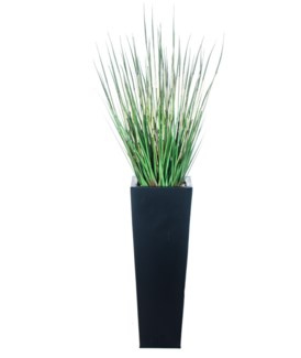 Large Horse Tail Floor Plant