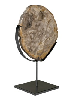 Wood Fossil with Stand, 12""