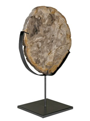 """Wood Fossil with Stand, 12"""""""