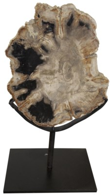 """QS Wood Fossil with Stand, 10"""""""