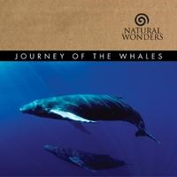 JOURNEY OF THE WHALES